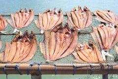 Torkad fisk som förläggas i ett kuggebambumagasin på soldagljus med havssikt Fotografering för Bildbyråer