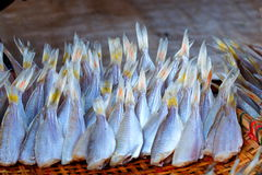 Torkad fisk, torr mat, Sol-torkad fisk, ny mat i marknad för Thailand ` s Royaltyfri Foto