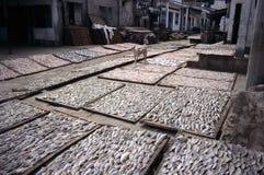 torkad fisk vietnam Royaltyfri Bild