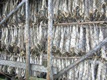 torkad fisklutefisk norway Royaltyfri Fotografi