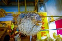 Torkad fugu som göras av lokalt folk, i en marknad i Hong Kong royaltyfri fotografi