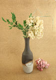 torkad grön hortensia Arkivbild