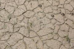 Torkad gyttja nära det torra året för flod Arkivfoto