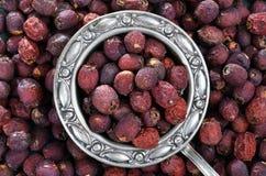 Torkad hagtorn - frukt, te som är syrligt, på ett trä royaltyfri fotografi