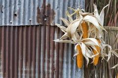 Torkad havre som hänger på det rostiga staketet för metallbransch royaltyfri fotografi