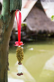 torkad jasmingirland som hängs på träd Royaltyfri Foto
