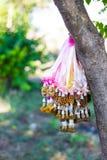 torkad jasmingirland som hängs på träd Royaltyfri Bild