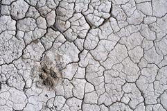 torkad jord Arkivfoto