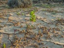 Torkad jord med första växter som växer I Arkivbilder