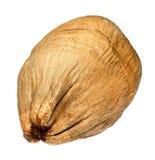 torkad kokosnöt Royaltyfri Fotografi