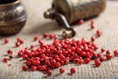 Torkad krydda för röd peppar Royaltyfri Foto