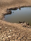 torkad lake för underlag Arkivbilder