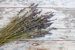 torkad lavendel royaltyfria foton