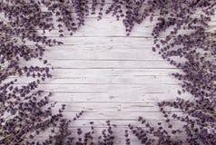 Torkad lavendel på träbakgrund Royaltyfri Foto