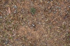Torkad lawn Arkivbild
