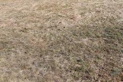 torkad lawn arkivfoto