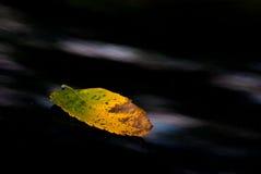 torkad leaf Arkivbilder