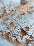 torkad leaf royaltyfri foto