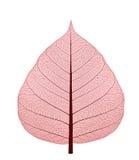 torkad leaf upp Arkivfoton