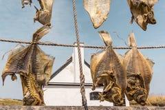 Torkad lutfisk som hänger på rep Arkivfoto
