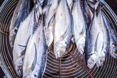 Torkad makrill på gallret, thailändsk matstil, saltad fisk Arkivbilder