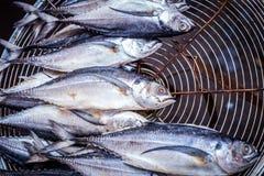 Torkad makrill på gallret, thailändsk matstil, saltad fisk Royaltyfri Bild