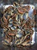 Torkad makrillfisk och sesam Arkivfoton