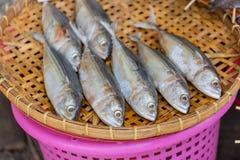 Torkad makrillfisk på bambu som tröskar korgen Royaltyfri Fotografi