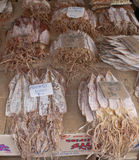 torkad marknadstioarmad bläckfisk Arkivfoton