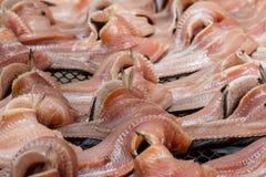 Torkad mat, torkad rimmad ung ogift kvinnafisk, thailändsk mat Arkivfoto