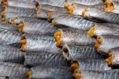 Torkad mat, torkad rimmad ung ogift kvinnafisk, thailändsk mat Fotografering för Bildbyråer