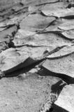 torkad mud Arkivbild