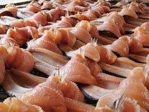 Torkad mudfish Arkivfoto