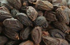Torkad NEEM-frukt med FRÖ, indica NIMODI-Azadirachta royaltyfri fotografi