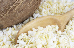 Torkad ny kokosnöt Royaltyfria Bilder