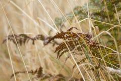Torkad ormbunke i gräset Arkivfoton