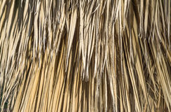 Torkad palmbladbakgrundslodlinje Royaltyfria Foton