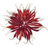 Torkad peppar för röd chili som isoleras på vit Arkivbild