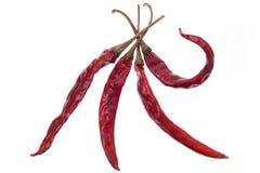 Torkad peppar för röd chili som isoleras på vit bakgrund Royaltyfria Bilder