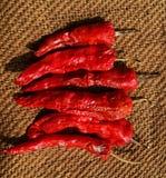 Torkad röd chili eller peppar Arkivfoto