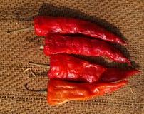 Torkad röd chili eller peppar Fotografering för Bildbyråer