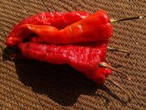 Torkad röd chili eller peppar Royaltyfria Foton