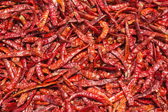 Torkad röd chili, matingredienser Fotografering för Bildbyråer