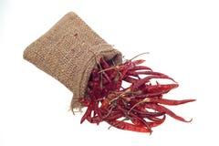 Torkad röd chili som isoleras på vit bakgrund Arkivbilder