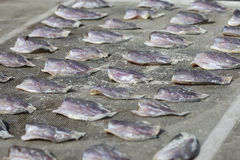 Torkad rimmad fisk Arkivbild