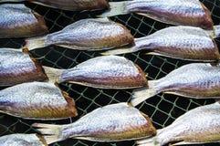 Torkad rimmad fisk Royaltyfri Fotografi