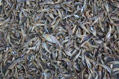 Torkad rimmad fisk på korgarna Arkivfoto