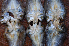 Torkad rimmad fisk på korgarna Arkivfoton