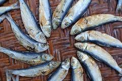 Torkad rimmad fisk på korgarna Royaltyfri Foto