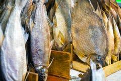 Torkad rimmad fisk som torkas på marknad Royaltyfria Foton